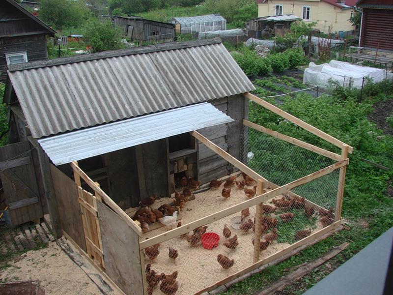 Загон для куриц