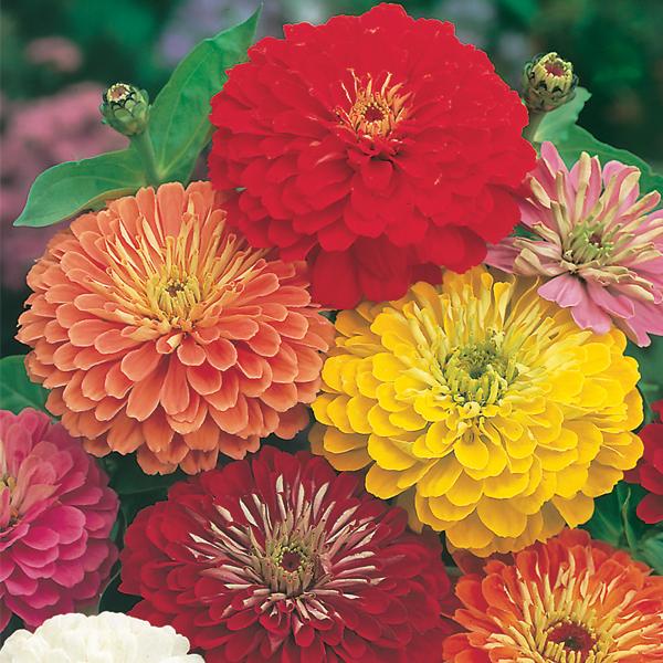 цвет, осени 23 (600x600, 589Kb)