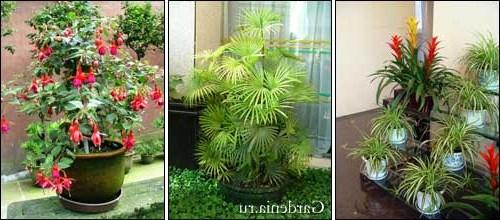 Цветы живые комнатные фото