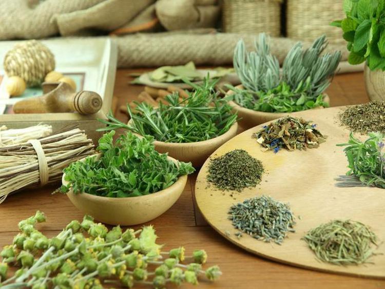 Лекарственные травы для здоровья и похудения