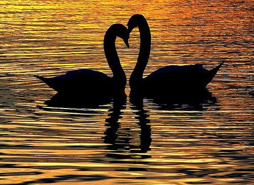 Какая разная любовь