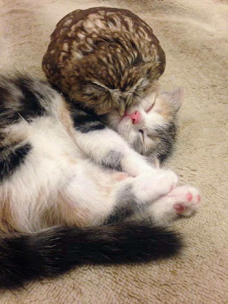 Неразлучные совенок и котик
