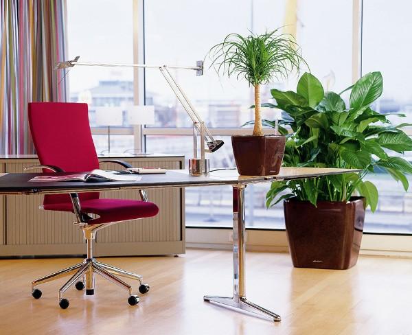 оформление интерьера рабочего кабинета растениями