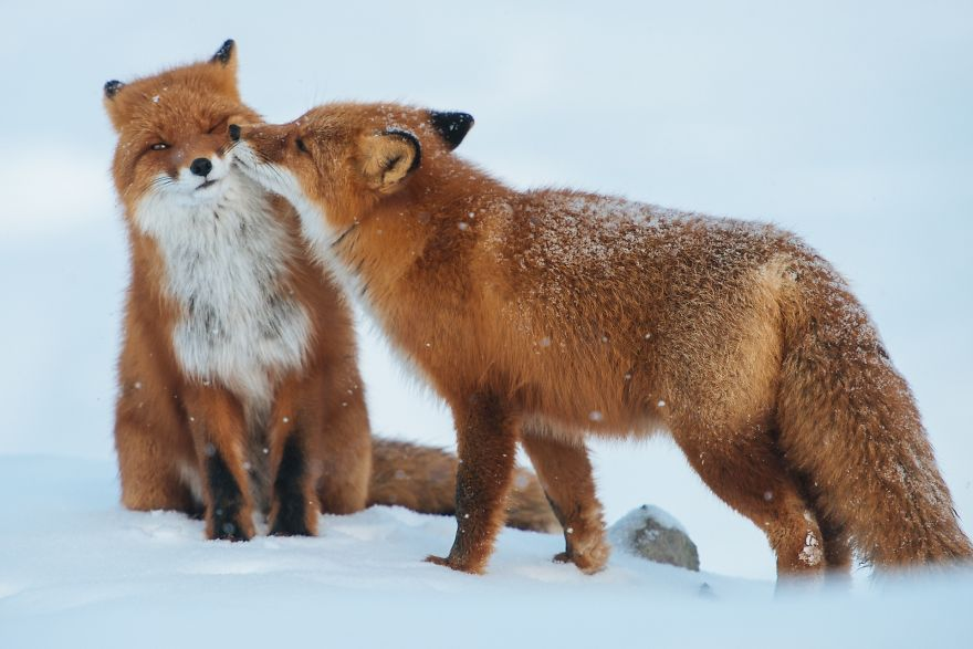 animals-love-couple-10__880