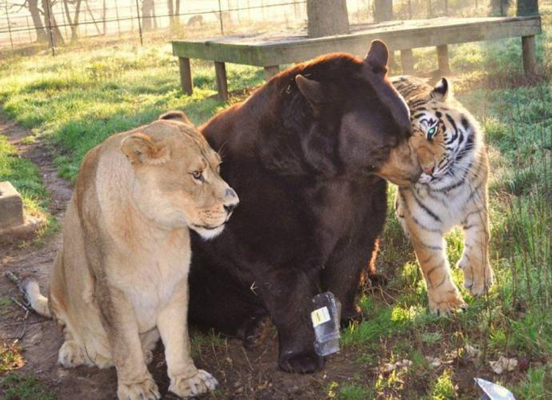 unbelievablefriendship 7 Невероятная дружба трех хищников