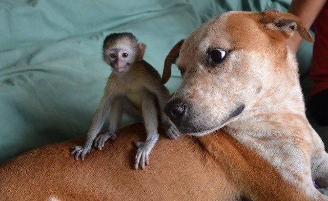 Собака, которую хотели усыпить, теперь спасает диких животных!