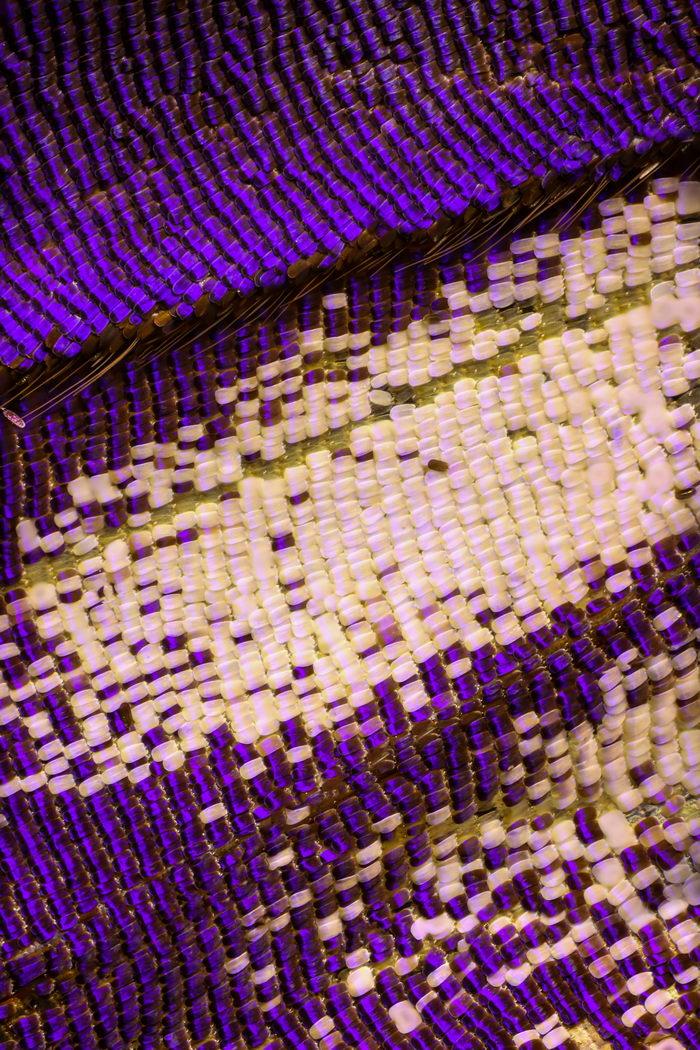 Крылья бабочек на макроснимках Chris Perani