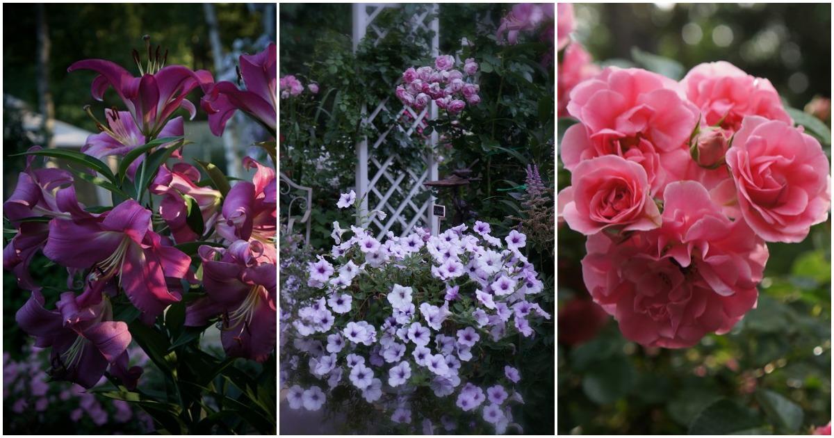 Царство цветов в летнем саду: чарующая красота, доступная всем