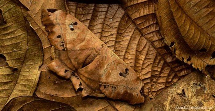 природный камуфляж