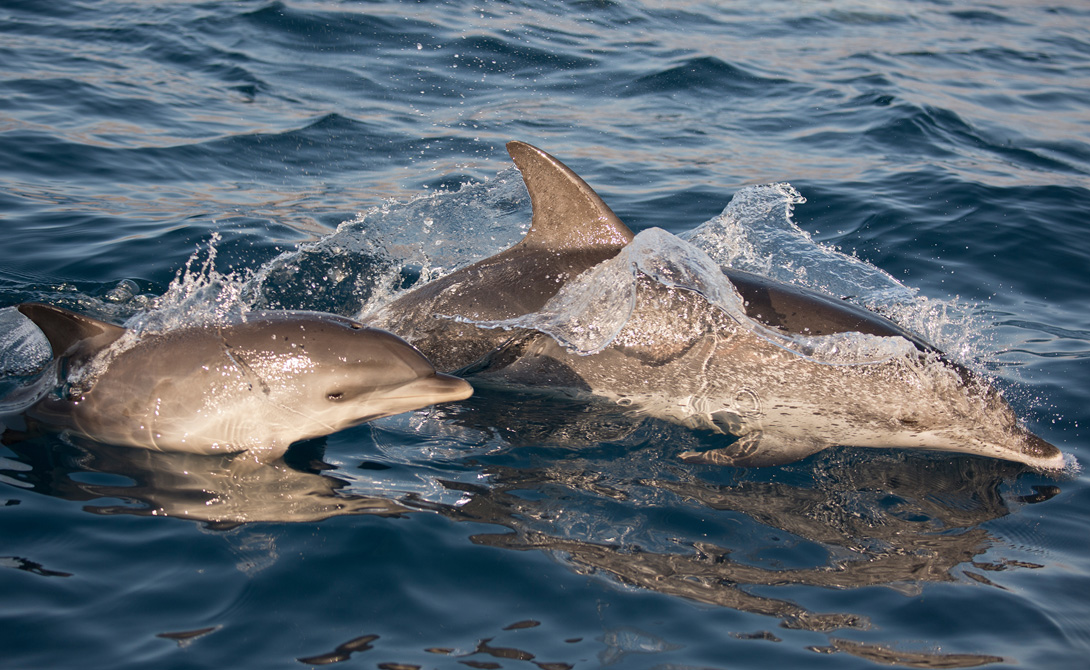 Темная сторона дельфинов