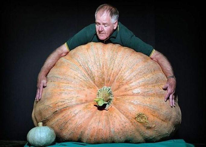 Гигантская тыква дача, овощи