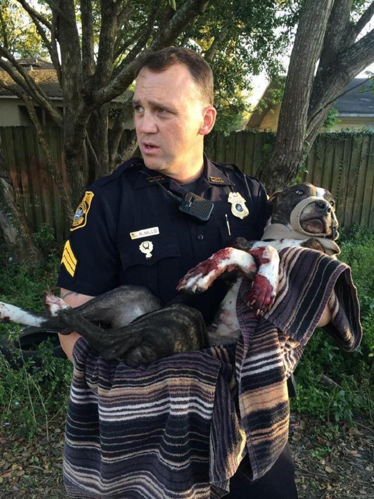 Он бросил на рельсах собаку... Но случившееся позже заставило меня поверить в справедливость!