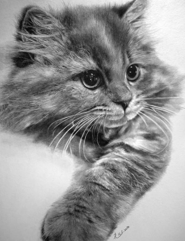 Фотографические рисунки кошек от Paul Lung
