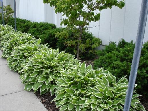 Красивый двор с декоративнолиственными растениями