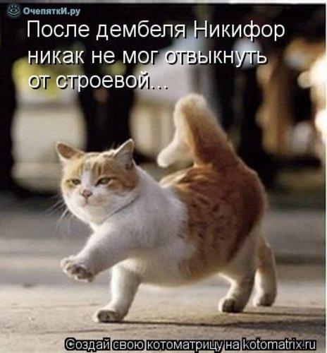 Юморная котоматрица 2