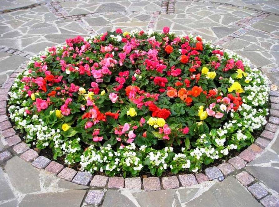 Фото цветочные клумбы своими руками