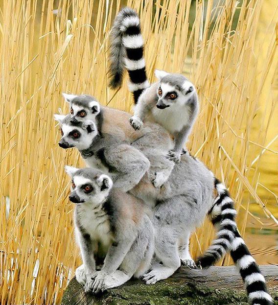 Эти забавные животные! животные, забавные, фото