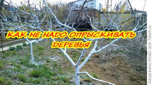 Как не надо опрыскивать деревья