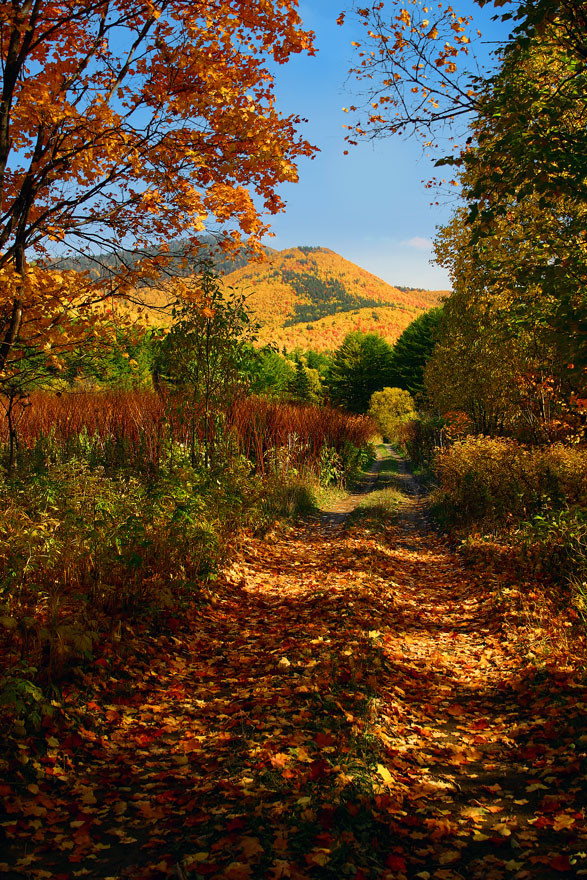 Природа Сахалина  природа, сахалин, фото