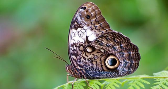 Бабочка с самым страшным коконом