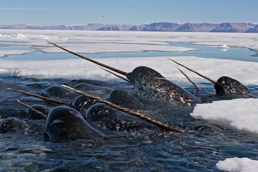 20 фото, доказывающих, что морские глубины — самое страшное место на Земле