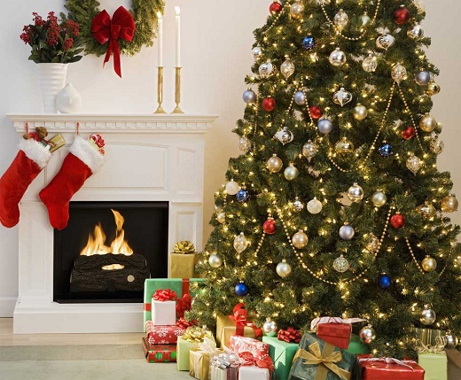 Как выбрать елку к Новому году: 4 совета от эксперта