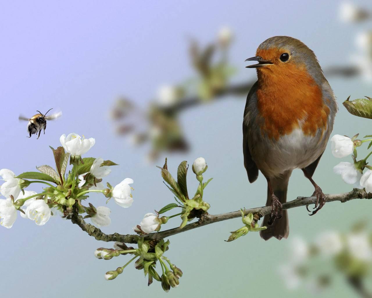 Релаксация. Красивая песня птицы Зарянка (Малиновка)