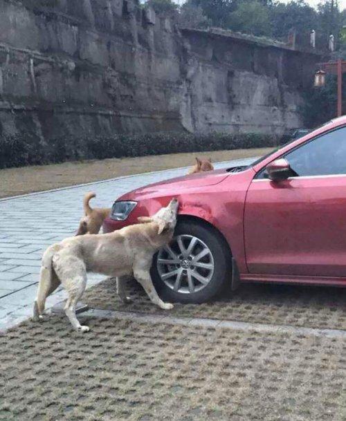 Месть бродячих собак