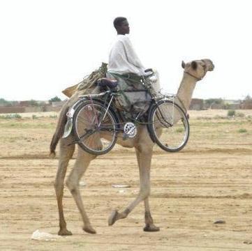 Camel Rack