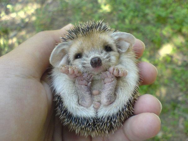 1. Маленький ёжик детеныши, животные, милота
