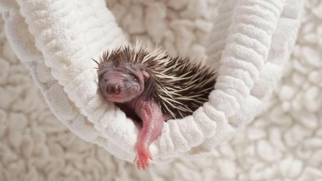 Эти новорожденные малютки растопят самое черствое сердце
