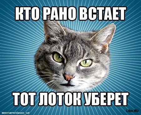 Мем: Типичный Кот