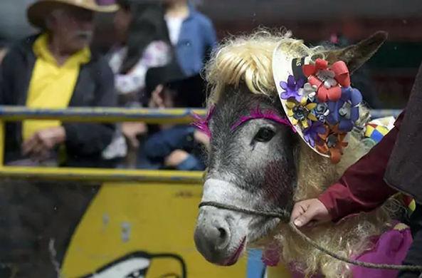 Ослица выиграла конкурс красоты для животных в Колумбии