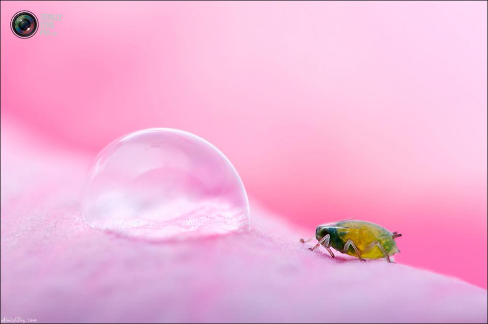 aimishboy 015 Удивительная макрофотография: неожиданно гламурные насекомые и многое другое