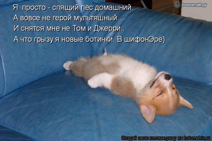 Юморная котоматрица 10
