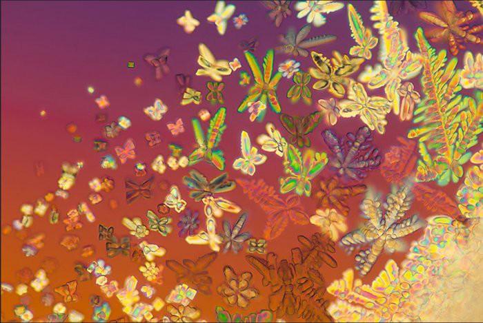 15. ДНК в форме кристаллов Линден Гледхилл, микроскоп, фото
