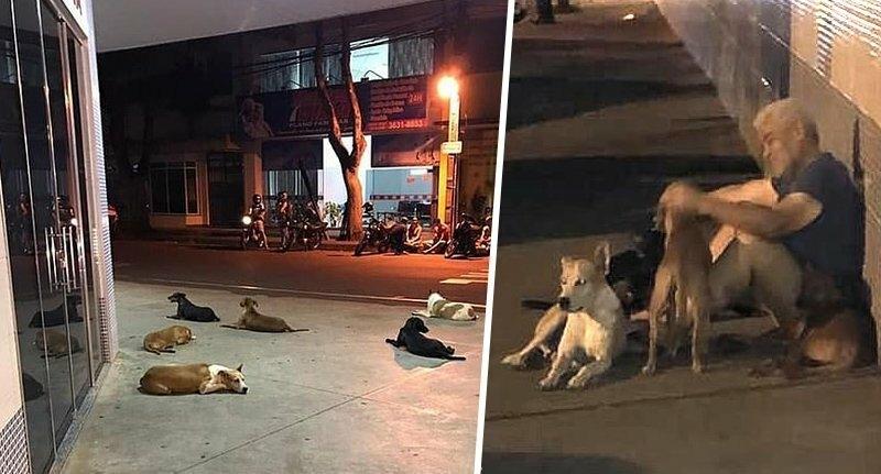 6 дворовых собак отказались …