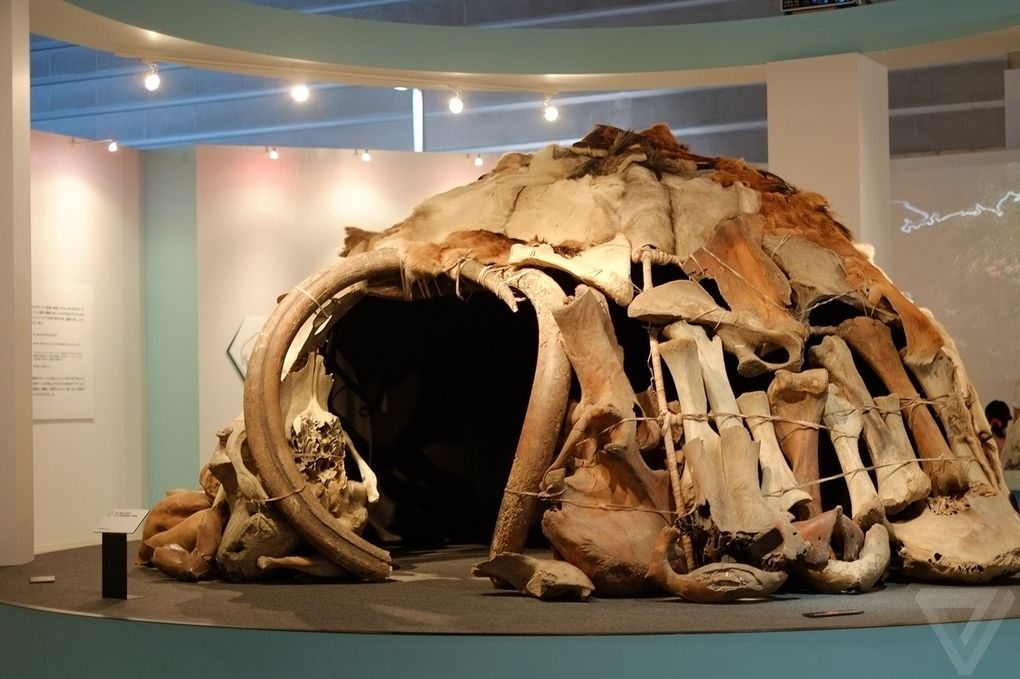 Yuka12 Самый известный мамонт из Якутии: Юка