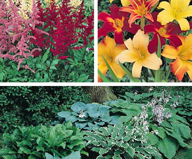 теневыносливые цветы для сада фото и названия