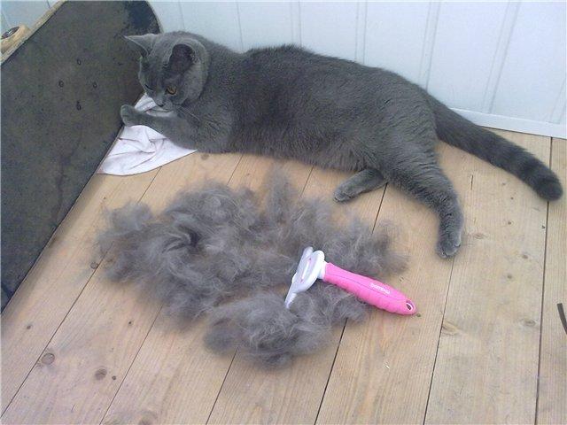 КОШКИН ДОМ. Почему у кошки выпадает шерсть?