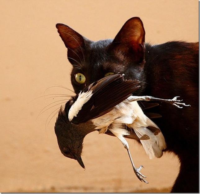Как кот улетевшего попугая д…