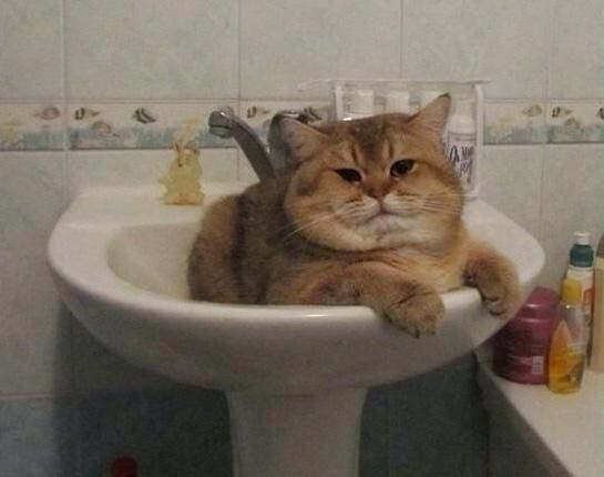 16 кошек, которым действительно нужны выходные
