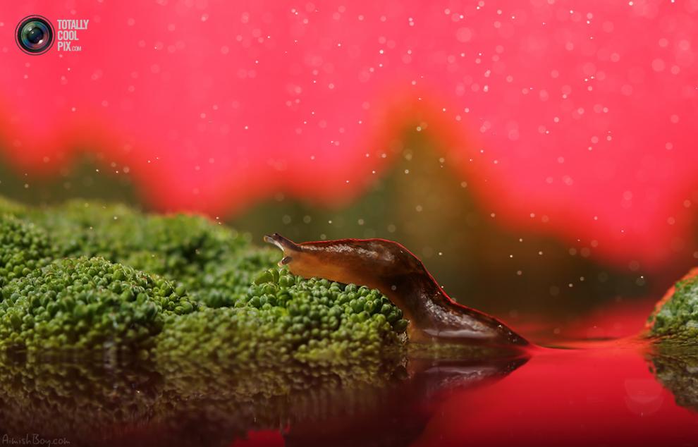 aimishboy 023 Удивительная макрофотография: неожиданно гламурные насекомые и многое другое