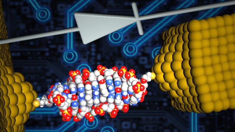 Самый маленький диод в мире сделан из ДНК