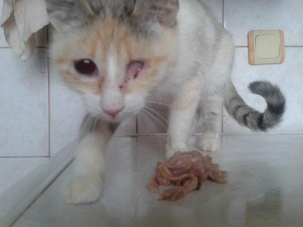ЖЕРТВЫ ВОЙНЫ. Донбасс, Луганск. 154 животных приюта Ларисы Салий погибает без еды – много больных животных.