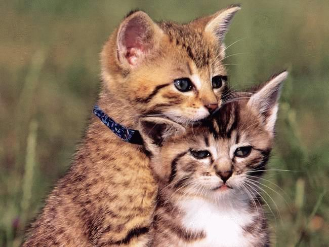 Кошачьи парочки)))