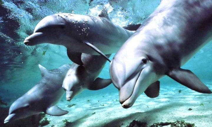 Потрясающее доказательство невероятной сообразительности дельфинов