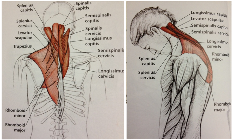 Сосудистая гимнастика для лечения головных болей и гипертонии