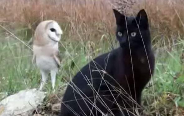 Дружба кота и совы (интересное видео)