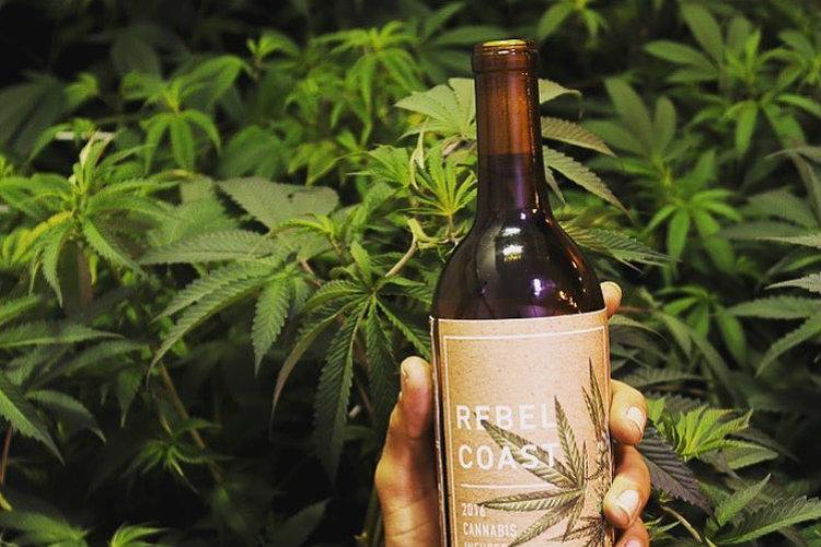 Вино из марихуаны: легально ли?